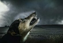 Why Do Dogs Howl