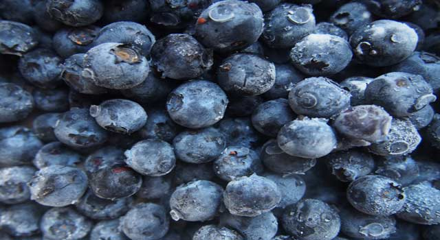 Health and Beauty Benefits of Blueberries