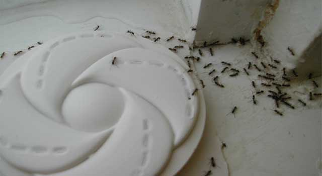 6 Best Way to Kill Small Ants in House