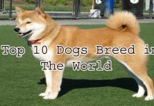 Top 10 Dog Breeds in the World