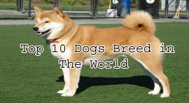 List of Top 10 Famous Dog Breeds in the World
