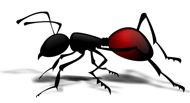 5 Natural Way to Get Rid of Ants in the Kitchen