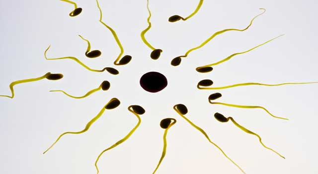 Best Ways to Increase Sperm and Motility