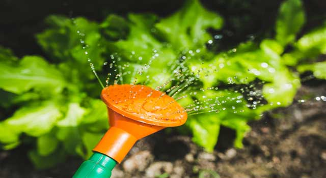 How to Plant a Garden for Good Mood