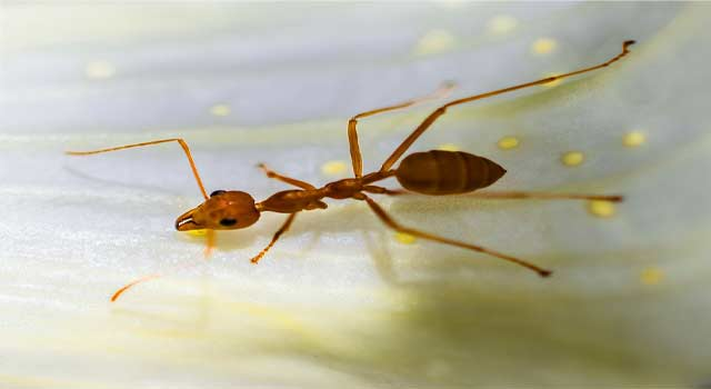 6 Best Way to Get Rid of Tiny Red Ants - HowFlux