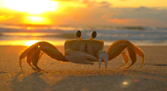 How to Get Rid of Crabs Fast