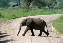 8 Interesting Facts about Elephants