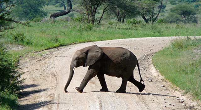 8 Interesting Facts about Elephants Memory - HowFlux