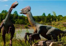 Information about Dinosaurs
