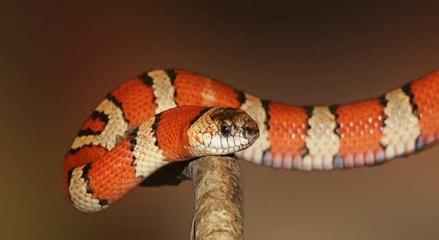 6 Easy Steps to Kill a Snake