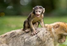 Top 8 Interesting Facts about Monkeys
