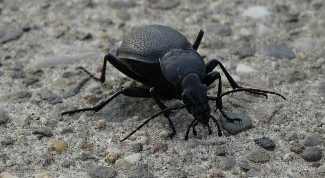 6 Steps to Get Rid of Beetles In Your Surroundings