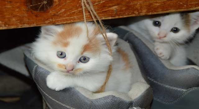 5 Steps to Get Rid of a Cat Around your House - HowFlux