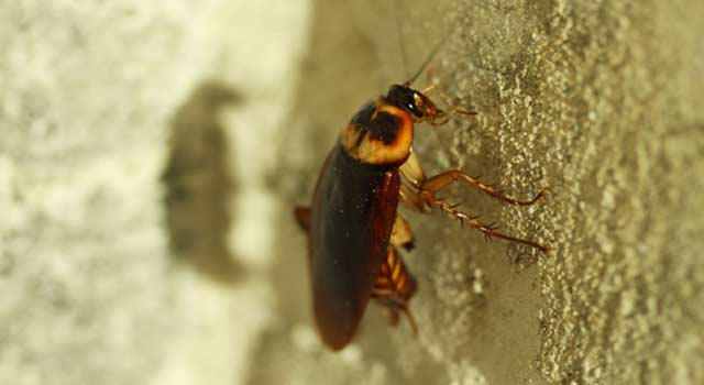6 Natural Way to Get Rid of Roaches in House - HowFlux