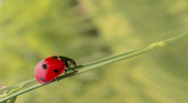 What is Pest - Insect Pests and Beneficial Insects