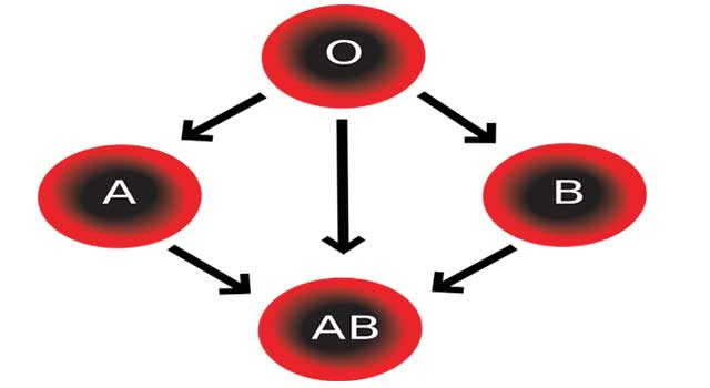 How do you Find Out your Blood Type (4 Steps) - HowFlux