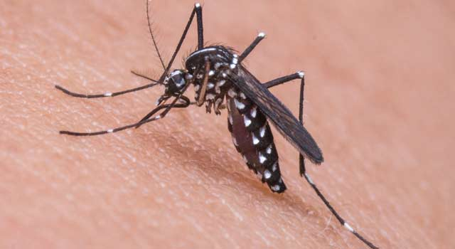 Steps For Getting Rid of Gnats in The House