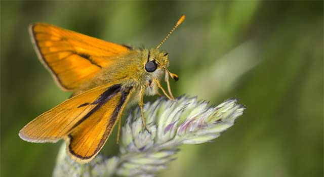 5 Ways to Get Rid of Moths in the House