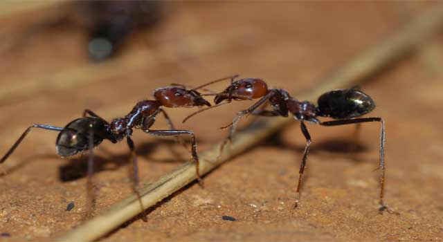 How to Get Rid of Carpenter Ants Around your Home