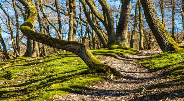 How does Forests Prevent Soil Erosion