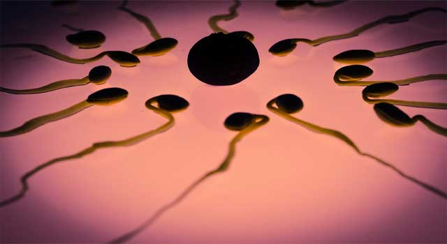 home remedies to increase sperm count in males
