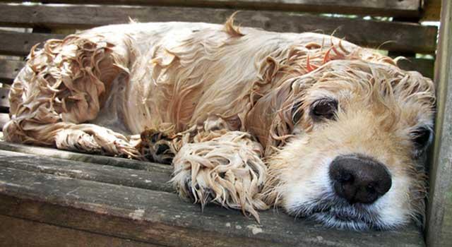 Make Dog Smell Good After Bath