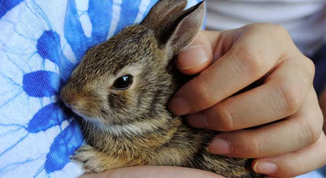 How to Make Your Rabbit Affectionate