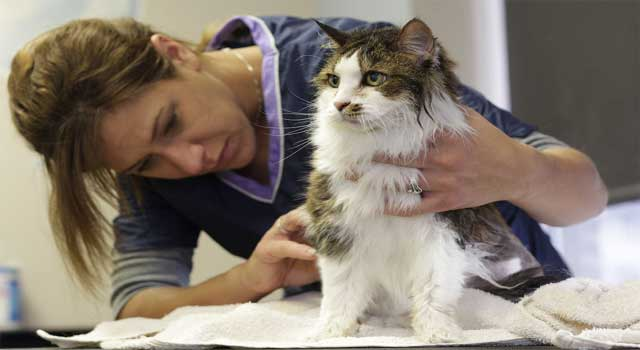 how to give cat a bath without getting scratched