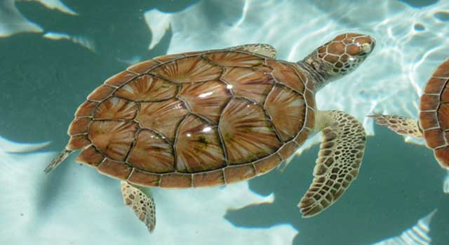 10 Very Interesting Facts About Sea Turtles
