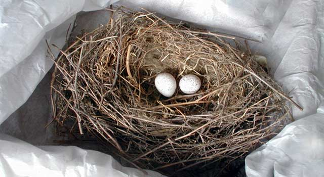 What Do Birds Use To Make Their Nests