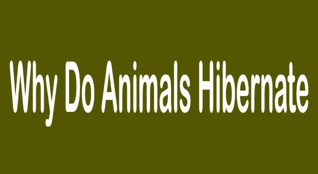 why do some animals hibernate and others don't
